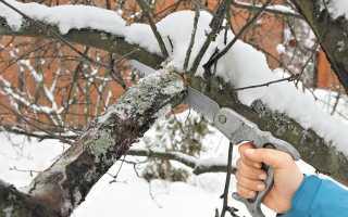 Бензопилы для обрезки деревьев на высоте